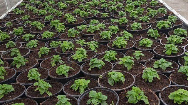 Plantjesmarkt van Clusius College, opbrengst voor Stichting Hidde