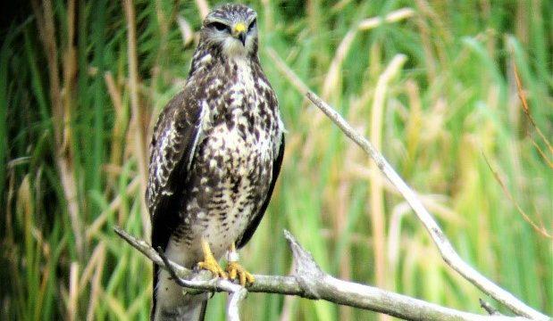Vogelexcursies in de Nationale Vogelweek
