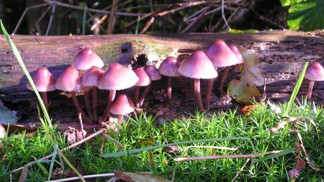 Paddenstoelen in het herfstbos